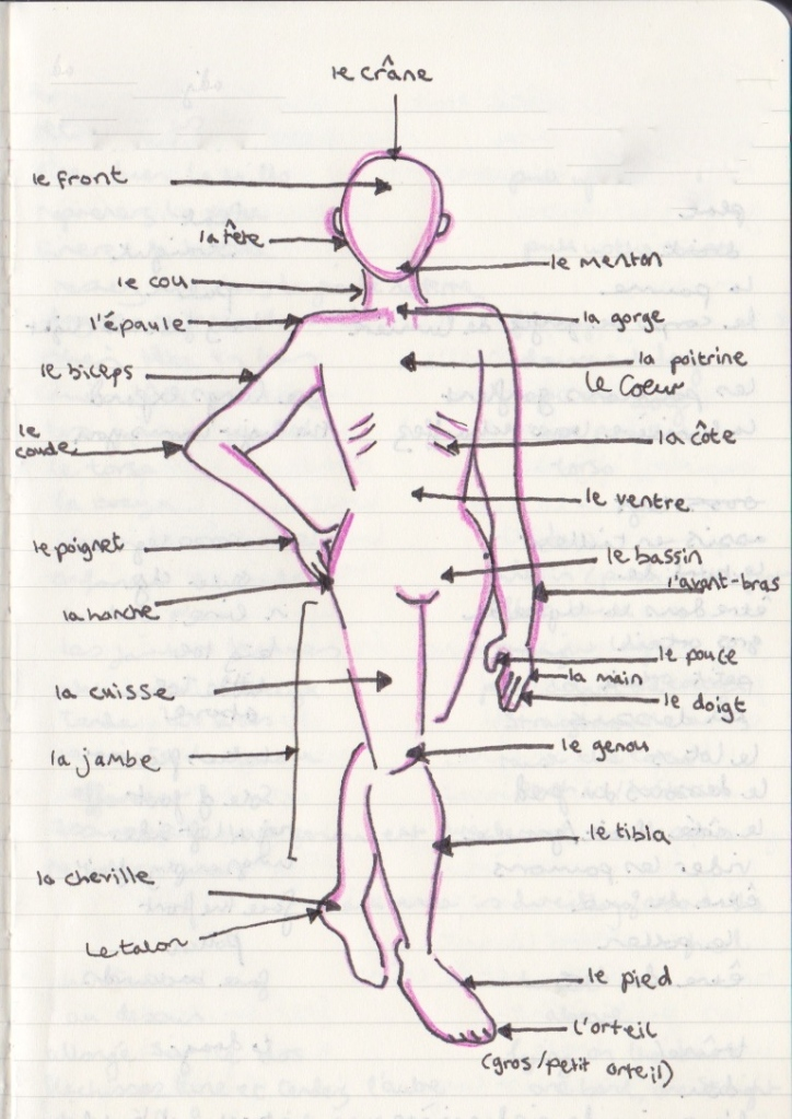 Drew this to help me learn the parts of the body in French for my teaching!